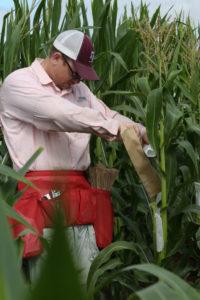 seth murray, Texas A&M corn breeder