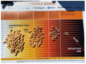 peanut maturity board